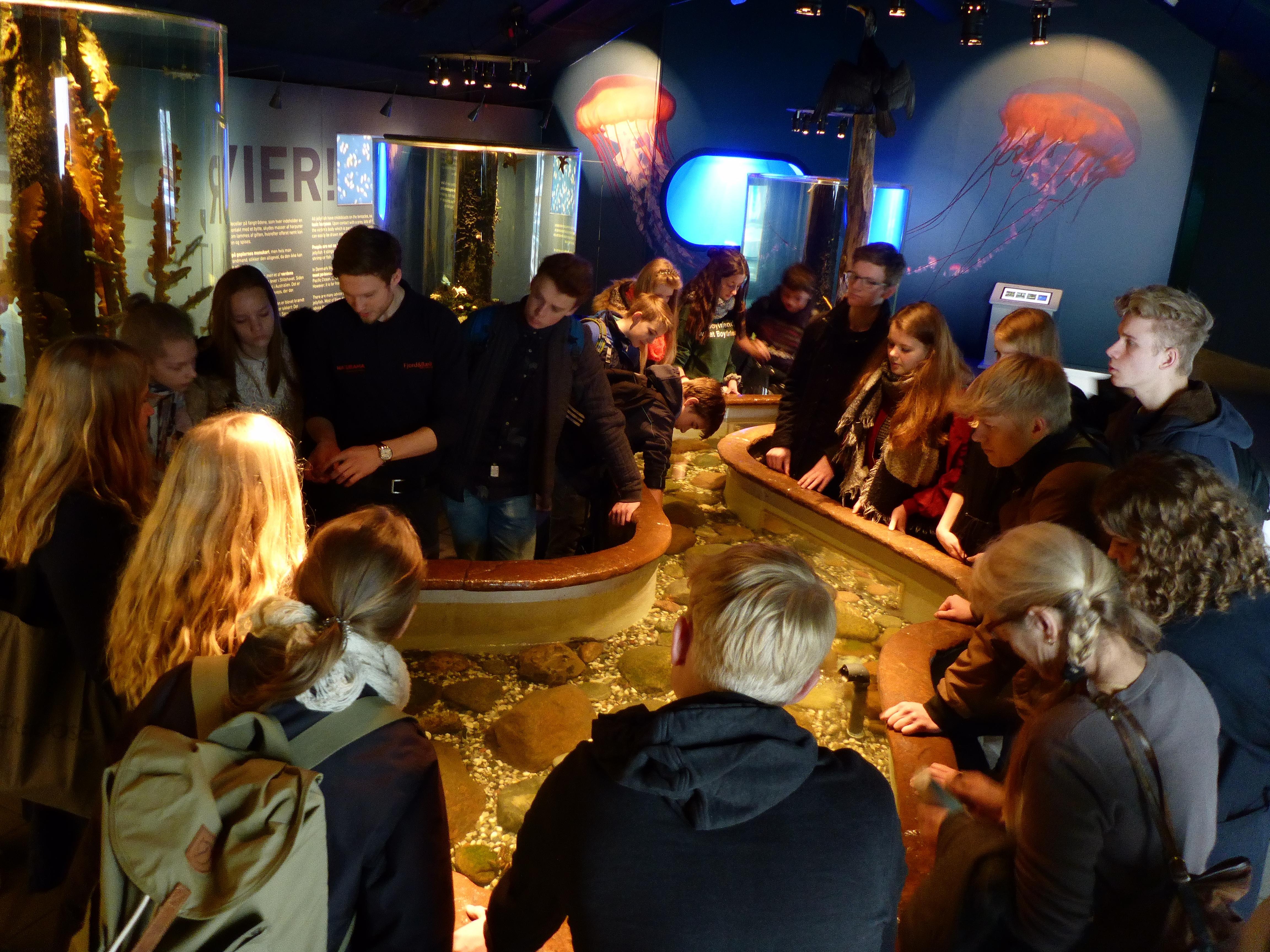 4-Krabbenstreichelzoo---im-Fjord-und-Belt-Aquarium.JPG