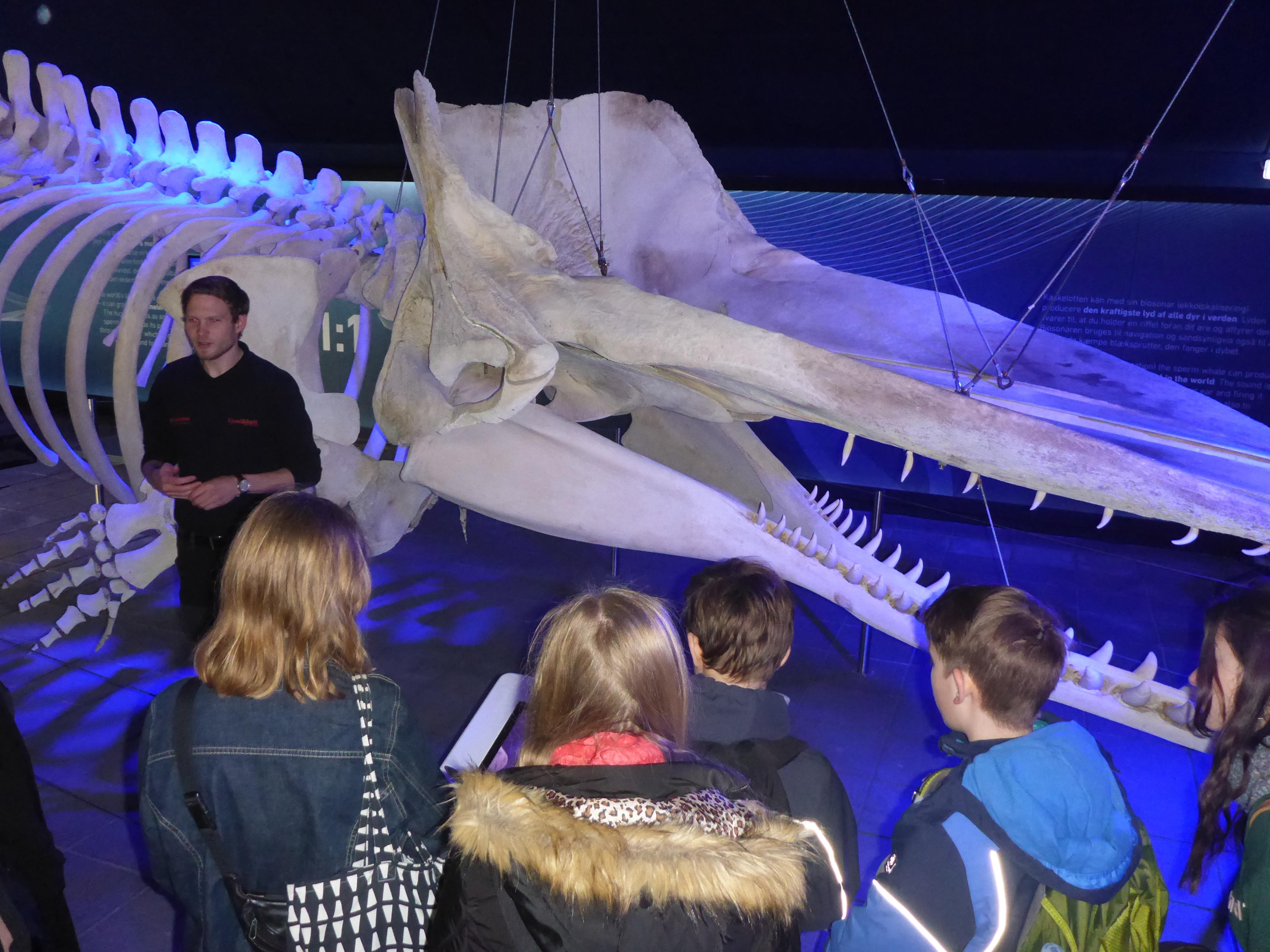 5-Skelett-eines-Wales-im-Fjord-und-Belt-Aquarium.JPG